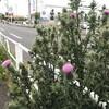 コロナ禍があぶりだす日本のガラパゴス化