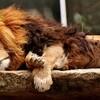 【正月休みを無駄にする過ごし方】寝だめは逆効果、休み明けが辛くなる