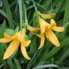 季節の花、それぞれの花の季節