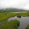 平が岳の花々  2009.7.19