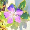 訪問者の開花