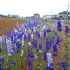 浜ちゃん日記  梅雨入り宣言と花活動
