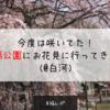 【お花見2018】今度は咲いてた!南湖公園にお花見に行ってきたよ!(@白河)