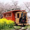 成田ゆめ牧場で春