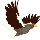 鷹の就活日記