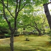 宝厳院の青紅葉と苔