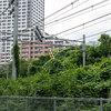 【追記あり】JR川崎駅近くの桜並木を襲った異変について、川崎市に問い合わせ、JRに意見しました。