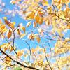 空気が秋になってきました。