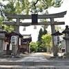 新熊野神社の樟の新緑。