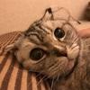 猫トイレと下痢便