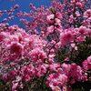 お花見と、テレワーク