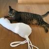 白ネズミさんと猫