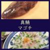旬の真鯒(マゴチ)を捌いて頂く。料理は刺身と白子ポン酢!