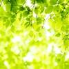 新緑の季節の軽井沢結婚式の魅力