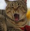 眠いので。。。ここ数日のプーチンさん(猫)のダイエット食のっけます(^^♪