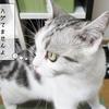 猫の病気~抜け毛を伴う病気~