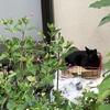 猫が好きな人を助けるTNR♪