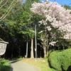 姫路ゆめさき川温泉 夢乃井 散策道で森林浴