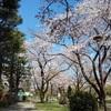 お花見スポットと心霊スポットの両方を兼ね備えた市川市「里見公園」を訪問