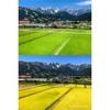 【長野県白馬村】田んぼの稲が黄金色に染まって、夏景色から秋景色へ。
