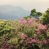 多々謝々!台湾の旅(7):陽明山、天燈節