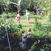 edible jungle/ エディブルジャングル