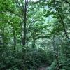 世界遺産 大自然の白神山地が教えてくれる大切なこと