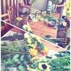 宮崎市雑貨屋 コレット~毎月第4水曜日。午後3時からは・・・『み花』さんによるお花教室🌻🐝