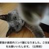 猫の鼻腔内リンパ腫㉒ 高額な治療費を払うために