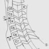 頸椎レントゲンの見方