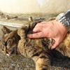 5月後半の #ねこ #cat #猫 その3