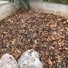 気が向いたので菜園の落ち葉に米ぬかを散布してみました