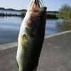 【霞ヶ浦水系】釣れる スピナーベイト & 使い方をご紹介