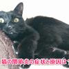 猫の関節炎の症状と治療法、自然療法で治るの?