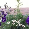 今日は花壇に植え込みへ