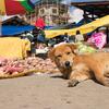 幸せの国☆ブータンを訪ねて 〜 ブータン観光 Day2 ブルーポピーと出会う 〜