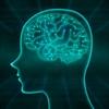 6月30日は「アインシュタイン記念日」~アインシュタインの脳みそが一般人と違うところは?(*´▽`*)~