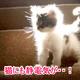 猫に触ると静電気?理由や対策は?スプレーの効果は?