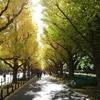 神宮外苑散歩「銀杏並木」