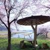 桜並木と東屋 毘沙門観光簗の東屋