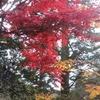 広島県の宮島のもみぢ谷公園は紅葉が美しいのでオススメ!その模様をお届けします!