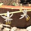 オリヅルラン 花が咲く