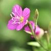 季節の花(令和三年五月 1)