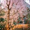 まだはだ寒い頃の京都御池の夕暮れ・オリンパス35RD