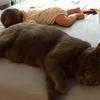 次女ちゃん(6ヶ月)と猫
