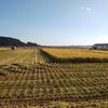 10月25日 収穫作業の紹介