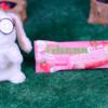 【ガーナ チョコ&クッキーサンド 恋味いちご】ロッテ 1月6日(月)新発売、コンビニ アイス 食べてみた!【感想】