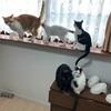 ネコのためにコストコに行きました。多頭飼いなら利用価値アリ!