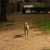 【一日一枚写真】インドの野良犬達 Part.6【一眼レフ】