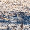 2019年1月19日の鳥撮り-さいたま市